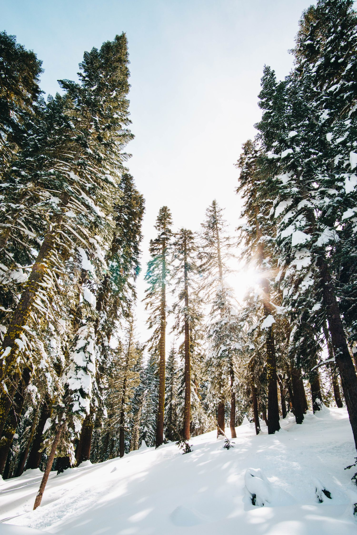 Snow-Shoeing Out of the Comfort Zone